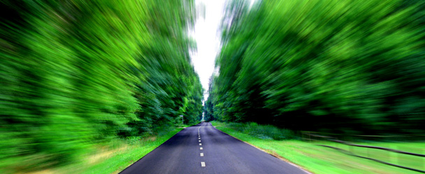 driving green trees car